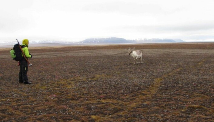 Mathilde Le Moullec and her field partner Morgan Bender spent weeks hiking and camping across Svalbard to tally reindeer.