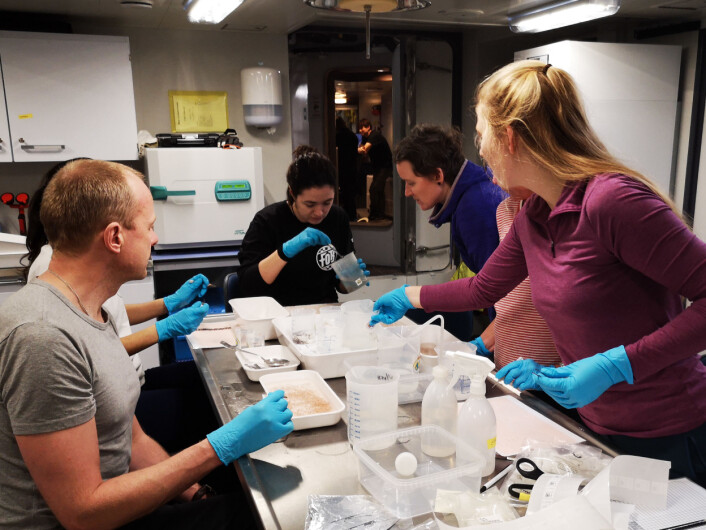 Action in the zooplankton lab after net samples have come on board. Sorting to species and groups and freezing material for later analyses, for instance of energy content and organic pollutants.