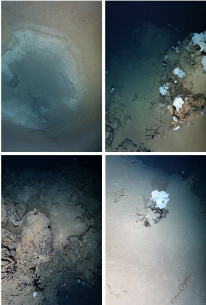The pictures show the typical fauna on the Aurora volcanic field. The first picture shows a large sinkhole.