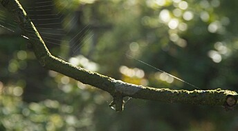 Spider webs and other sources of ideas