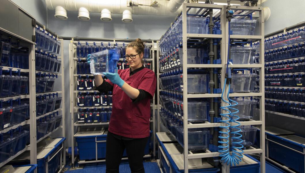 Zebrafish facility at NCMM.