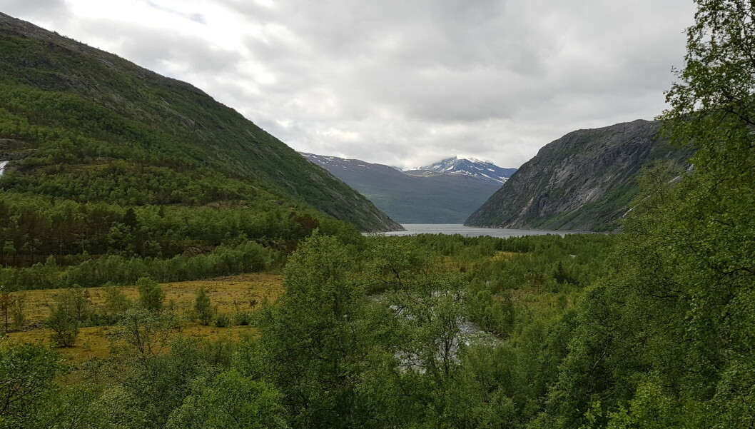 The reasons for global greening vary – intensive use of land for farming, large-scale planting of trees, and a warmer and wetter northern hemisphere. On Norwegian maineland the treeline slowly moves upwards. This photo is taken in Rombaksbotn, county of Nordland, 68°27 N.