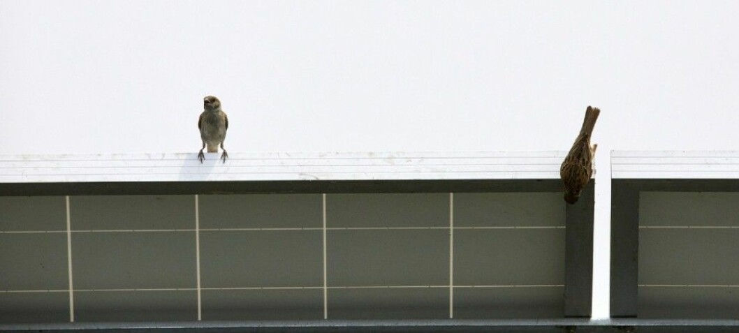 Do birds like modern architecture?