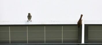 Do birds like modern architecture?
