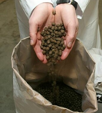 Farmed salmon and trout eat pellets that contain a variety of oils and proteins.