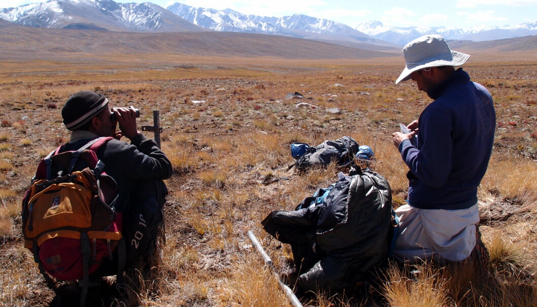 Field biologists installing wildlife cameras and collecting DNA samples in Deosai National Park.
