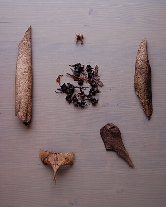 Selection of bones found at the settlement in Varanger.