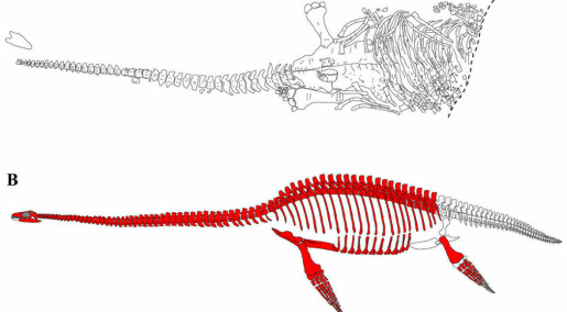 Discovered new species on Svalbard: Britney was an arctic plesiosaur with a tiny head and enormous eyes