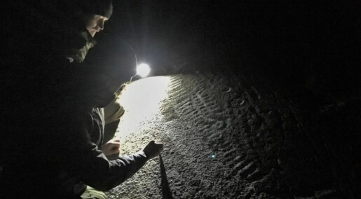 Bronze age art hunters: Three friends crack the code for finding petroglyphs, ancient rock carvings