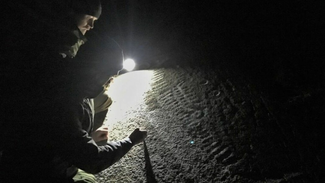 In late March, three friends hunting for petroglyphs made an exciting discovery. The majestic ship pictured was hidden in the Norwegian municipality of Råde for 3000 years. All that was required to bring it to light was to sweep away a bit of soil. Rock carvings are easiest to find in the dark.