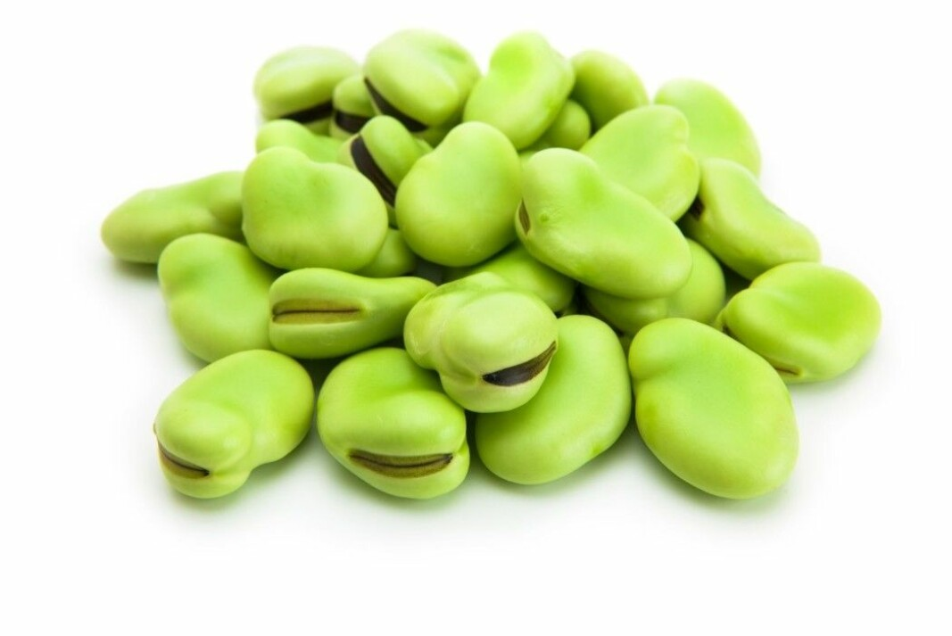 Fava beans, also known as faba beans, field beans, horse beans and broad beans.