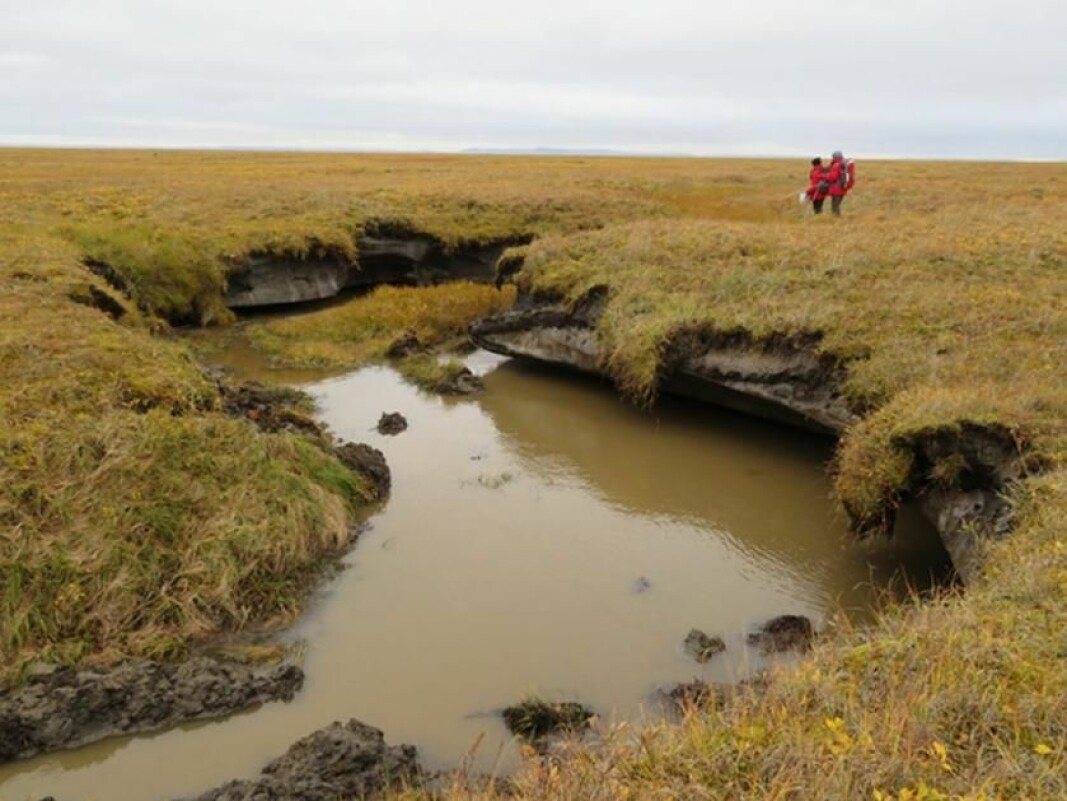 A thermokarst pond in Siberia. Massive ground ice layers are visible under the vegetation. When they melt, the surface can collapse into depressions. According to the new study, such processes could dominate the landscape in the future.