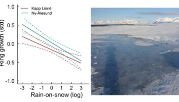 The graph shows how polar willow growth decreases with increasing amounts of rain-on-snow events. The picture to the right shows why: rain-on-snow events encase the willows with an impenetrable layer of ice.