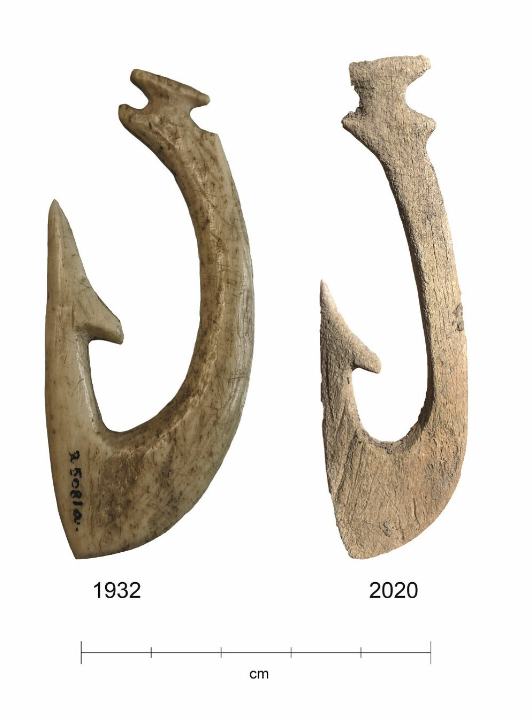 Extremely good conditions in the wetland have preserved the 5000-year-old bone implements very well. But after the wetland was drained, conditions changed. The fish hook found in 2020 is in much worse condition than the hook found in 1932.