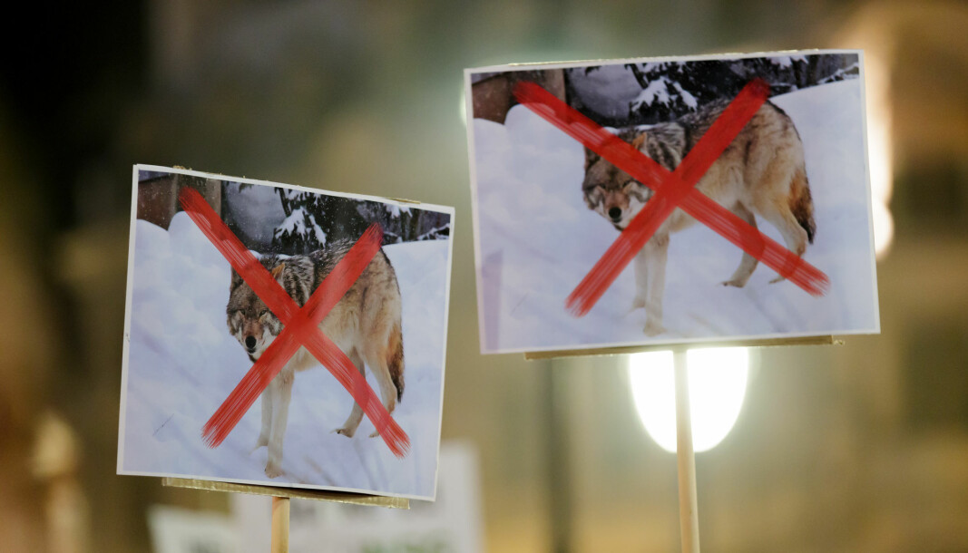 The People's Action for a new Predator Policy was established in the year 2000 and has as one of its goals to work against policies that protect flocks of wolves in Norway. The picture is from a demonstration organised last year, in 2019, in Oslo in collaboration with Naturbruksalliansen, an alliance of organisations and districs that are working to ensure that the target population of wolves is also the maximum population of wolves in Norway.