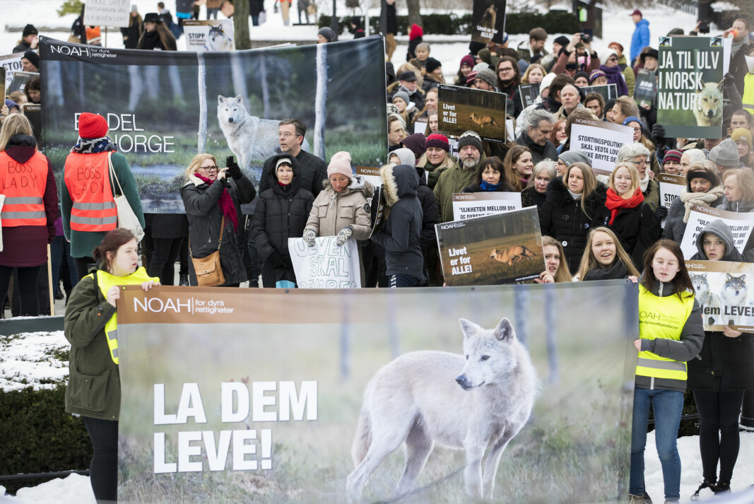 "A demonstration in Oslo in 2018 against the killing of wolves, organised by the animal rights organisation NOAH. The poster states ""Let them live!"". Another poster in the background says ""Yes to wolves in Norwegian nature""."