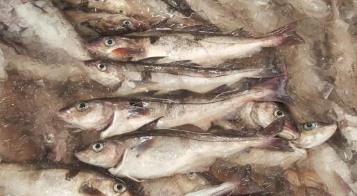 Fish is fish - isn't it?