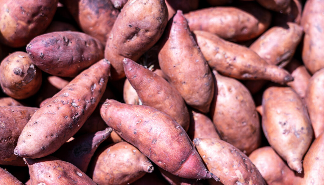 The Polynesian word for sweet potato is kumala, while in Ecuador in South America some call it cumal.