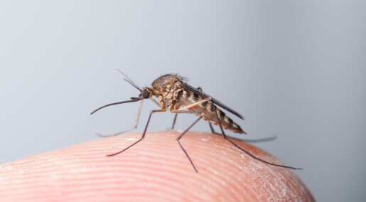 Your blood is a power meal for mosquitoes