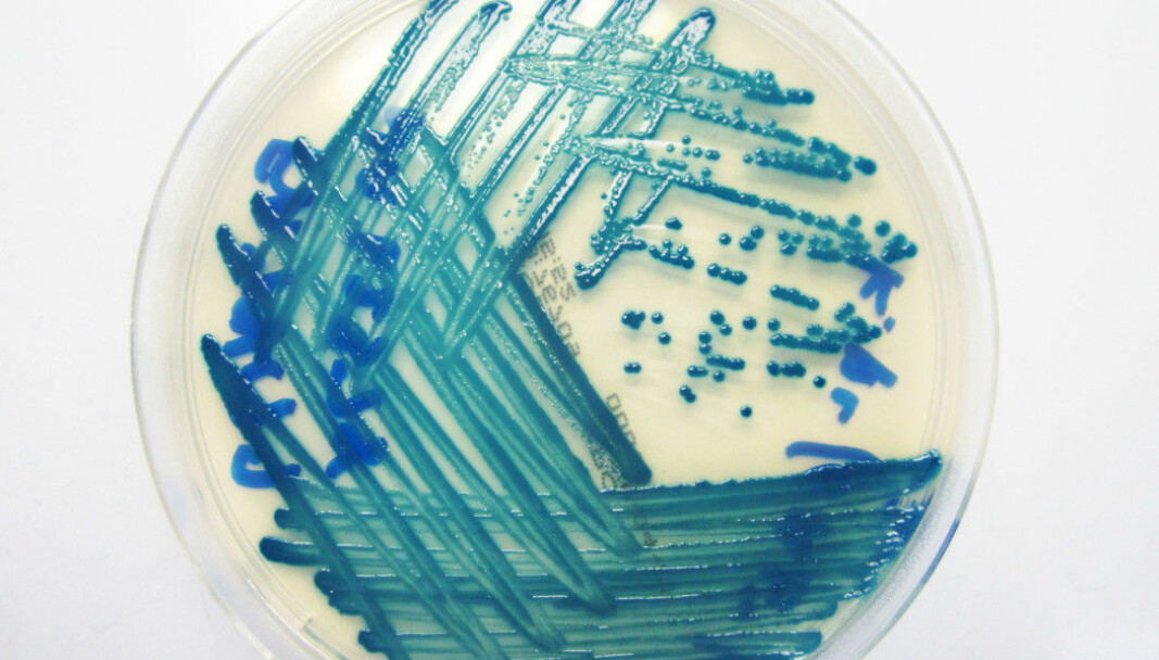 Resistant bacteria have enzymes that can destroy antibiotics. And these enzymes can easily be passed on to other bacteria.
