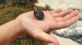 The hunt for a shell with a left-hand twist