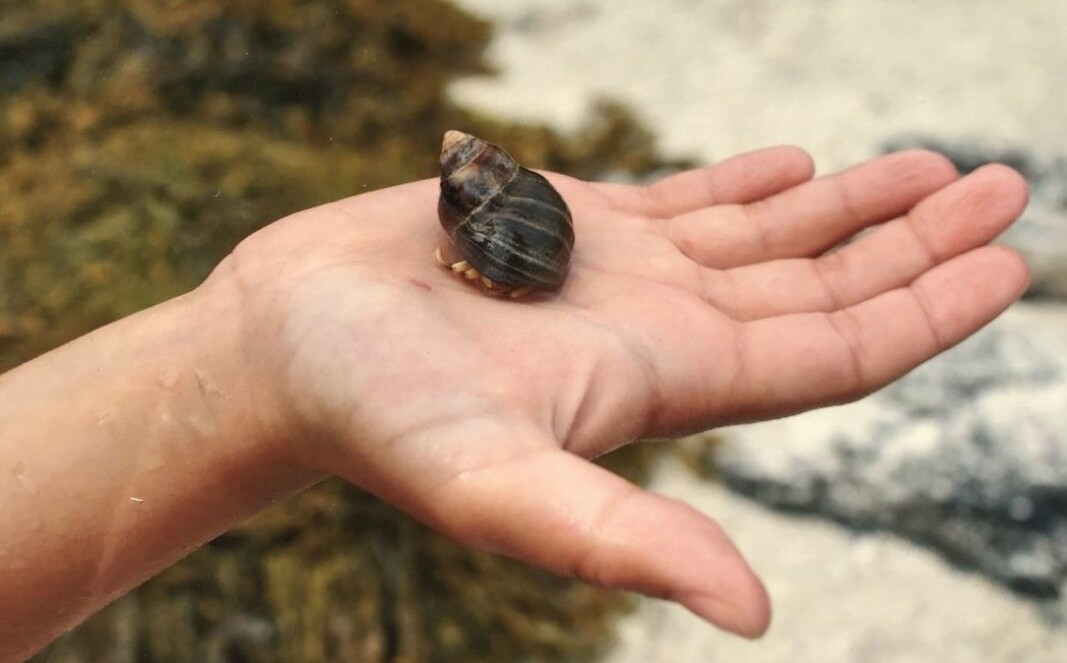 As the hermit crab grows, it must move into to ever-larger sea shells. But what if none of the new shells fit?