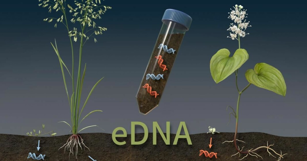 DNA fragments in soil samples reveal the plant species that live there, even if they are not visible.
