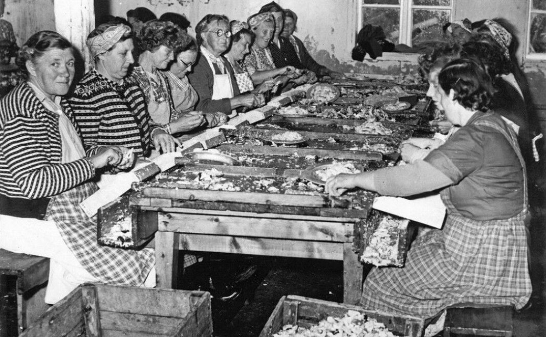 The canneries along the Trøndelag coast allowed many coastal women to have income-generating work.