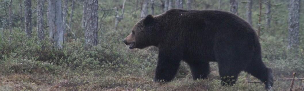The Wildlife Blog