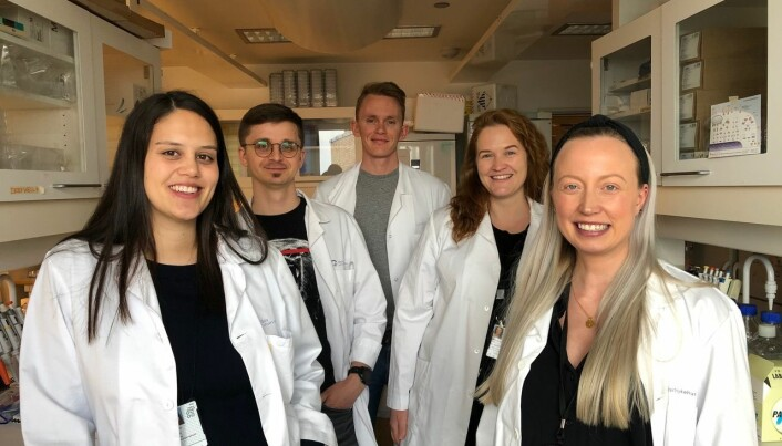 "The team of reesarchers behind the recent published article on ""Super Albumin"": Jeannette Nilsen, Algirdas Grevys, Torleif Tollefsrud Gjølberg. Heidrun Elisaberth Lode and Malin Bern."