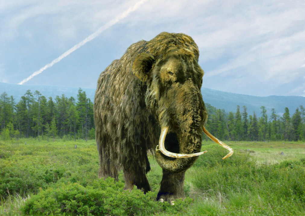 Maybe these are the mammoths' old friends?