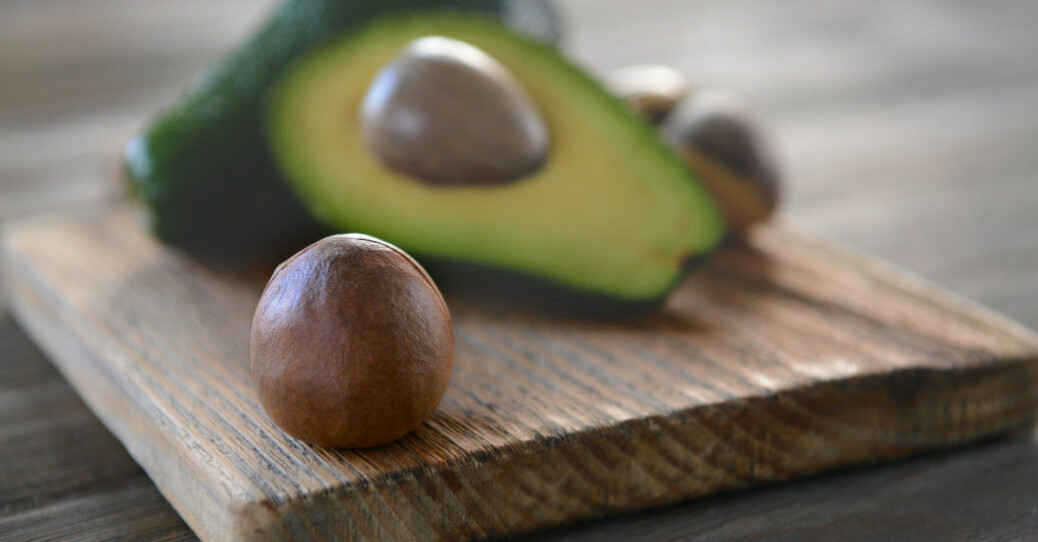 Why does the avocado have such huge seeds? Meet the plants that have lost their enormous partners