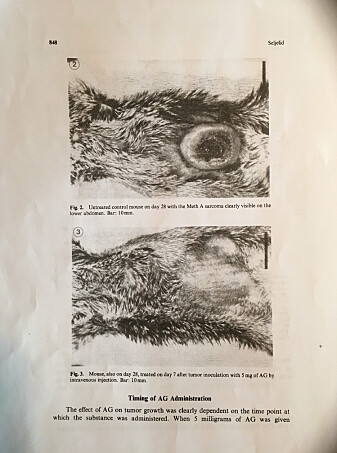 The 1986 research article contains pictures of the huge tumour in animals that didn't receive beta-glucan. The pictures of the mice that got the substance show only the scar left behind by the tumour that grew on their bellies just a few weeks before.