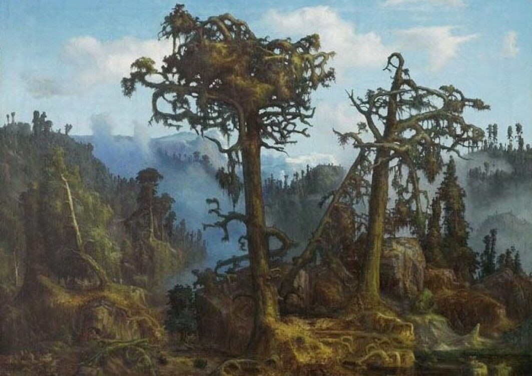 Crooked old pines and bearded spruces in the dusk, creaking in the wind. This is how Norway's primeval forest was interpreted by the artist Lars Hertervig who painted