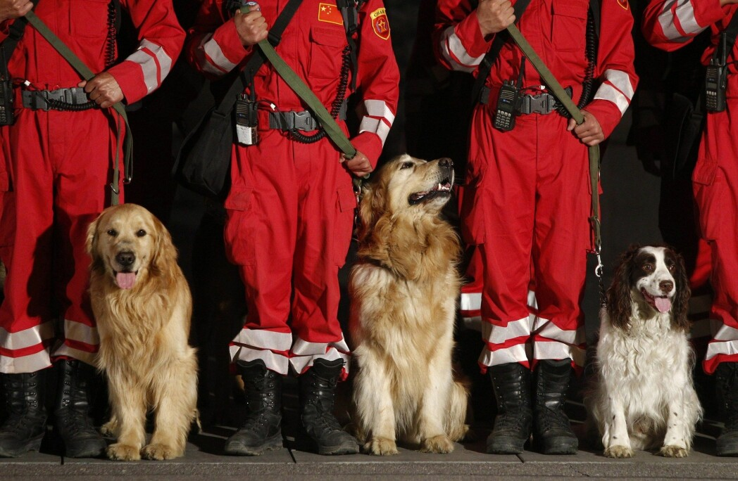 Chinese search and rescue dogs are seen with their handlers as they prepare to head to Nepal from Beijing on April 26, 2015.