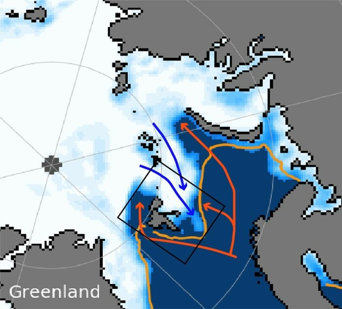 Figure 1: Sea ice concentration (white) for 5 February 2021 taken from the National Snow and Ice Data Center (nsidc.org). The orange line marks the sea ice front over the years from 1981-2010. The red arrows indicate where the warm Atlantic Ocean water flows and the blue arrows indicate where Arctic water flows into the Barents Sea. The black box shows the cruise and the Nansen Legacy project's study area.
