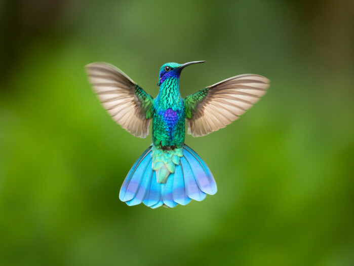 Hummingbirds can decide to become torpid to save energy on long journeys.