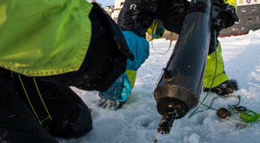 Tiny Arctic wildlife matters