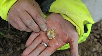 Seven rare gold pendants were sacrificed 1500 years ago in Østfold county of Norway