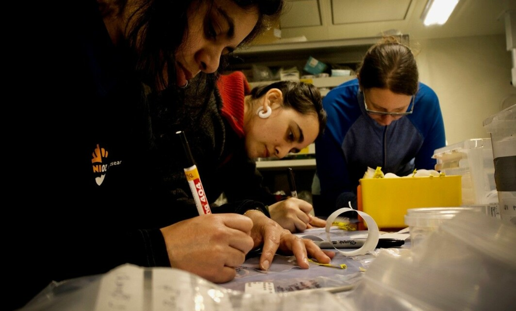 Some of the benthos team labelling and preparing samples before they get muddy.