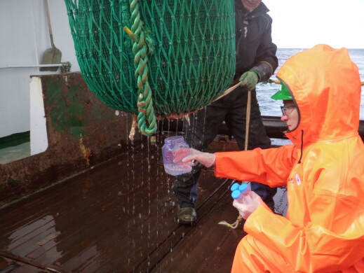 Taking samples of the water dripping from the trawl.