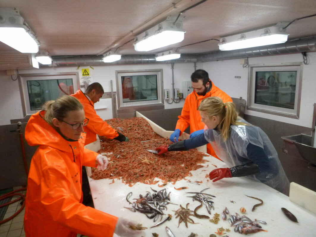 Sorting the fauna caught in bottom trawls.