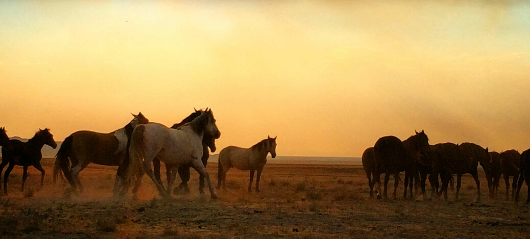 If horses hadn't made it out of North America, they probably wouldn't exist today