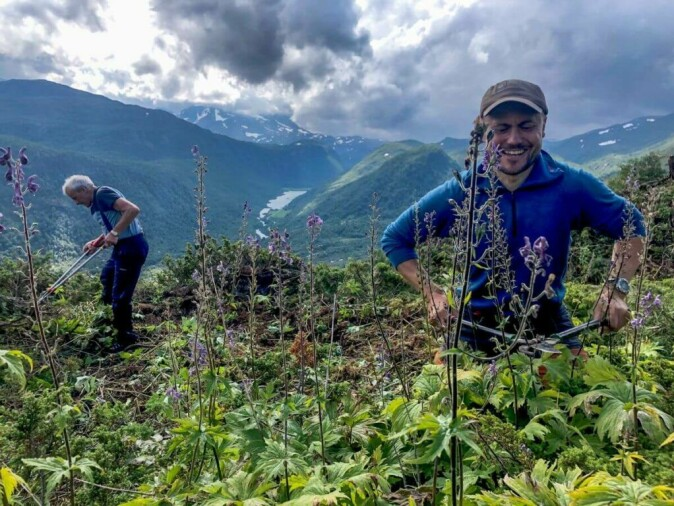 Reidar Marstein (left) and Elling Utvik Wammer are cutting and clearing the juniper.
