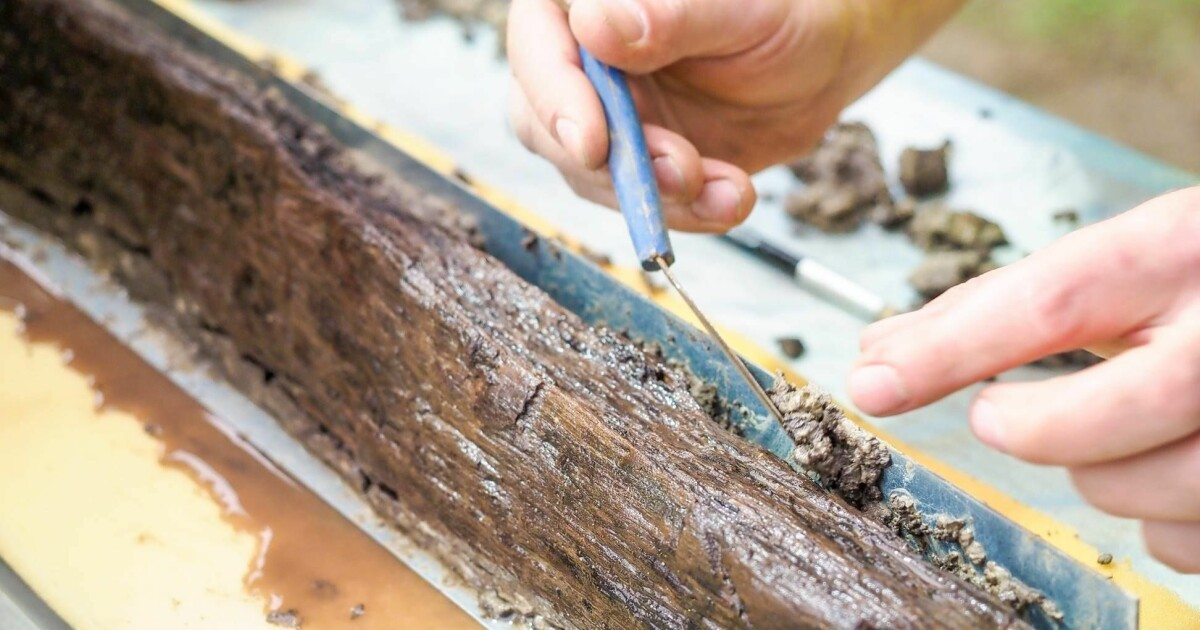 This piece of wood will help archaeologists reconstruct the grand Gjellestad Viking ship