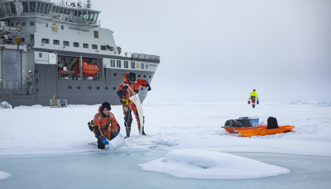Sampling in a melt water pond on top of the sea ice in the northern Barents Sea