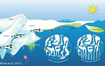 Figure 1. Illustration of the under and within sea ice community.
