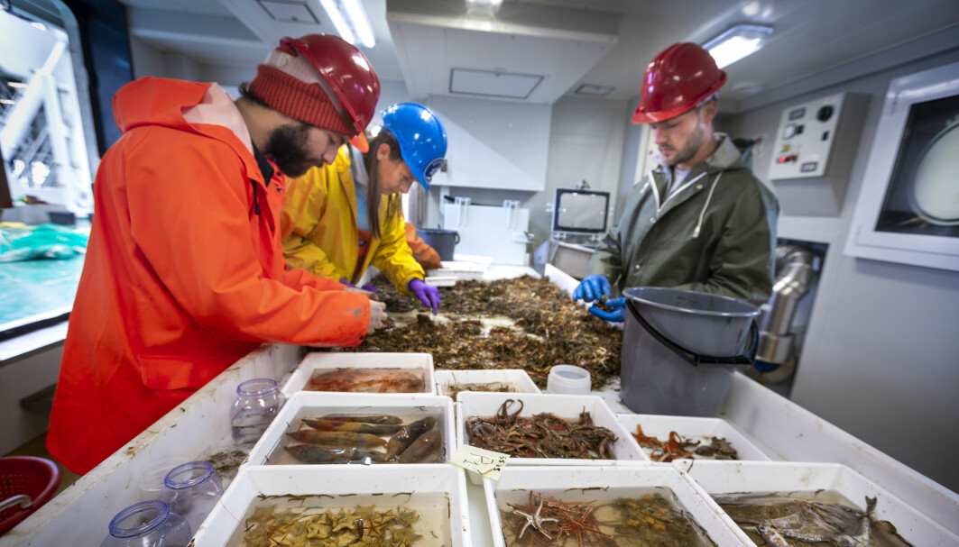 Sorting the catch of a bottom trawl