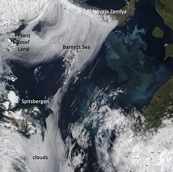 Figure 3: Algae can be observed from space as their presence or absence can change the color of the ocean. Satellite picture of a massive bloom of tiny algae called coccolithophores in the Barents Sea.