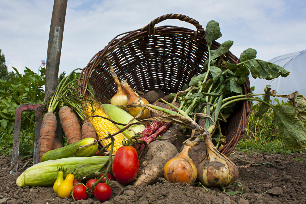 Vegetables are healthy, but are organic vegetables extra healthy?